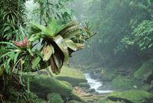 Bromeliads (brõ-më-lë-ad) / Greek for hidden flower Family: Bromeliaceae (bro-mee-lee-AY-see-ee) / by Pamela Seeley Sorrels