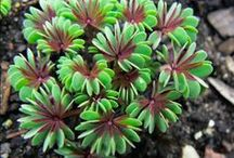 Plant ID two / by Pamela Seeley Sorrels