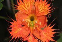Plant ID four / by Pamela Seeley Sorrels