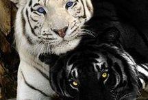 MEUS QUERIDOS ANIMAIS! / Quando eu olho nos olhos dos animais eu vejo a inocência e a confiança... que somente as crianças ainda têm! / by Aurea Lemos