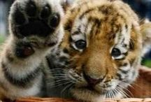 hello tiger / by hello products