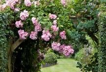 ~In The Garden~ / by Marla Corson