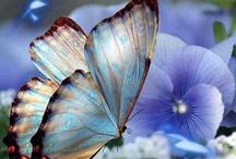 ~Butterfly Garden~ / by Marla Corson