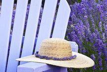 ~Sweet Fields Of Lavender~ / by Marla Corson