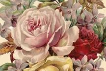 ~Bella Rose~ / by Marla Corson