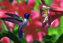 ~Hummingbirds~ / by Marla Corson