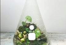 Lovely Terrariums / by Kat Ramsey