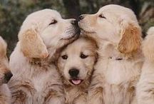 Cute Animals / by Caroline Lee