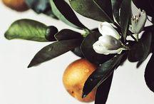 : Fiori & Frutta : Flowers & Fruits : / by Teresa Bertolini