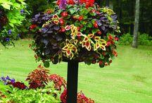 Gardening / by Lynne Power