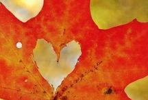Autumn!! / Nothing like Autumn!!  / by Geeky Beth