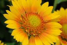 New Seed Varieties added in 2014 / by Swallowtail Garden Seeds