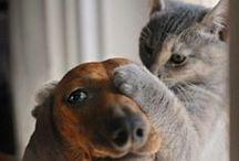 PETS / by Jane Drews