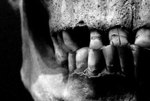 Skulls-r-us / Any skull is a good skull / by Steph Houstein