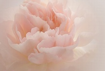 Fleurs / by Annick Thévenot