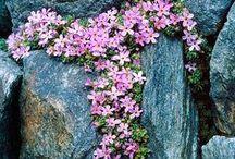rock garden bliss / by marlies johnston