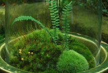 Ikebana / Floral arrangements of all types. Currently I am curious about moss. / by D.T. Nguyen Writer