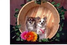 Cute Pets & Animals / by Linda Hilty-Tuttle