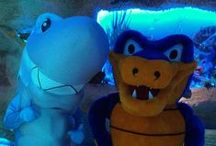 Snappy's AQUARIUM Adventure! / In honor of National Zoo & Aquarium Month (June), Snappy paid a visit to his pal Sharkey and friends at Houston's Downtown Aquarium. / by HostGator