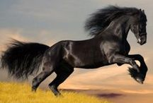 Our Favorite Horse Photos / by Time To Ride