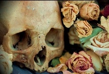 Skulls & Skeletons  / by Sonia Gignac