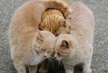 ~*Animalia*~ / Welcome to Animal Kingdom of Pinterest :)  / by Lita