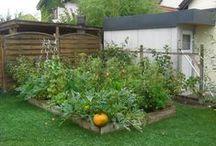 Garden / gardening tips, eco friendly / by Tina Kolouch