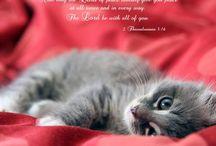 Bible verses *animal images* / by Vicky Pratt
