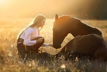 Equine/Equestrian love... / by Angela Leger