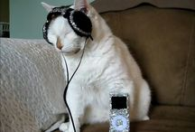 Viva Le Chat! / Leading the revolution against anti-feline propoganda! VIVA LE CHAT! / by ixel pixl