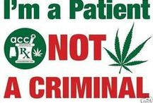 An Illegal Plant ? / There are none as blind as he who WILL not see.... The Medical Benefits of CANNABIS is obvious. It's a Gift from God ! Educate Yourself & Learn the TRUTH about the benefits of marijuana... Legalize it now !  / by Kathy Lynn Gray