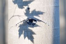 : Trees / Trees ~ I adore / by teresa ok