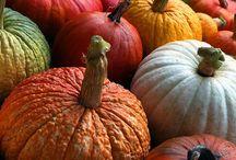 Autumn. / by Cheryl Watson