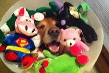 My FAVE Dog Breeds<3 / by LuLu The Sweet Carolina Girl