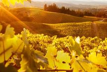 Sonoma Harvest Events / by Sonoma.com