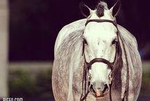 Equestrian / by Alyssa Jernigan