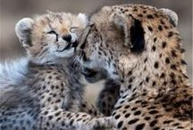 """♔ Les Gros Chats / ♔ Please follow the """"Pinterest Etiquette"""" and limit your pins to 10 pins per Board and 15 pins overall per day. Thank you.♔  / by Misha Alexis"""