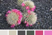 Colours / by Ariana Amorim
