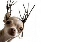 Winter Holidays / by Paola Gambetti