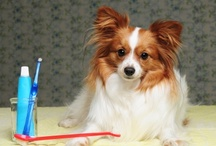 Pet Wellness and Prevention! / by Blair Animal Hospital