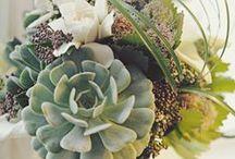 Flower Arrangements / by Shonesee Devereux
