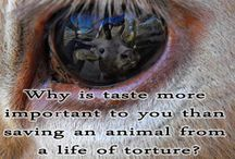 OMG! Go vegan, no animal cruelty, no meat and dairy factory farming, no zoos, no circuses, no GMO's, no chemicals! / These atrocities that are being committed to sentient beings must end!   / by Julie Livingston