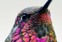 Birdwatching / by LaWally