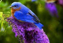 Birds & Butterflies / Birds, butterflies, nature / by Narcy Guajardo