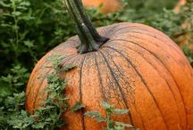 Fall Season ... Love it ! / PLEASE READ:  I believe Pinterest is for sharing. HOWEVER -Please do NOT RAID my boards or I will BLOCK you. Limit to seven pins per day! Thanks :-) / by Narcy Guajardo