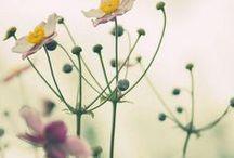 { spring } / by Botanical Nomenculture