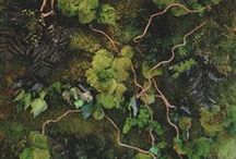 { moss } / by Botanical Nomenculture