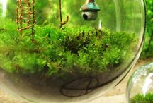 My Garden / by Anna Bolena Melendez