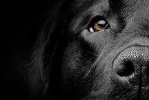 Dogs / by Anna Bolena Melendez
