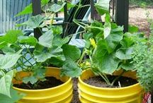 Gardening  / Plants, containers and others crafts ideas / by Amanda Salazar